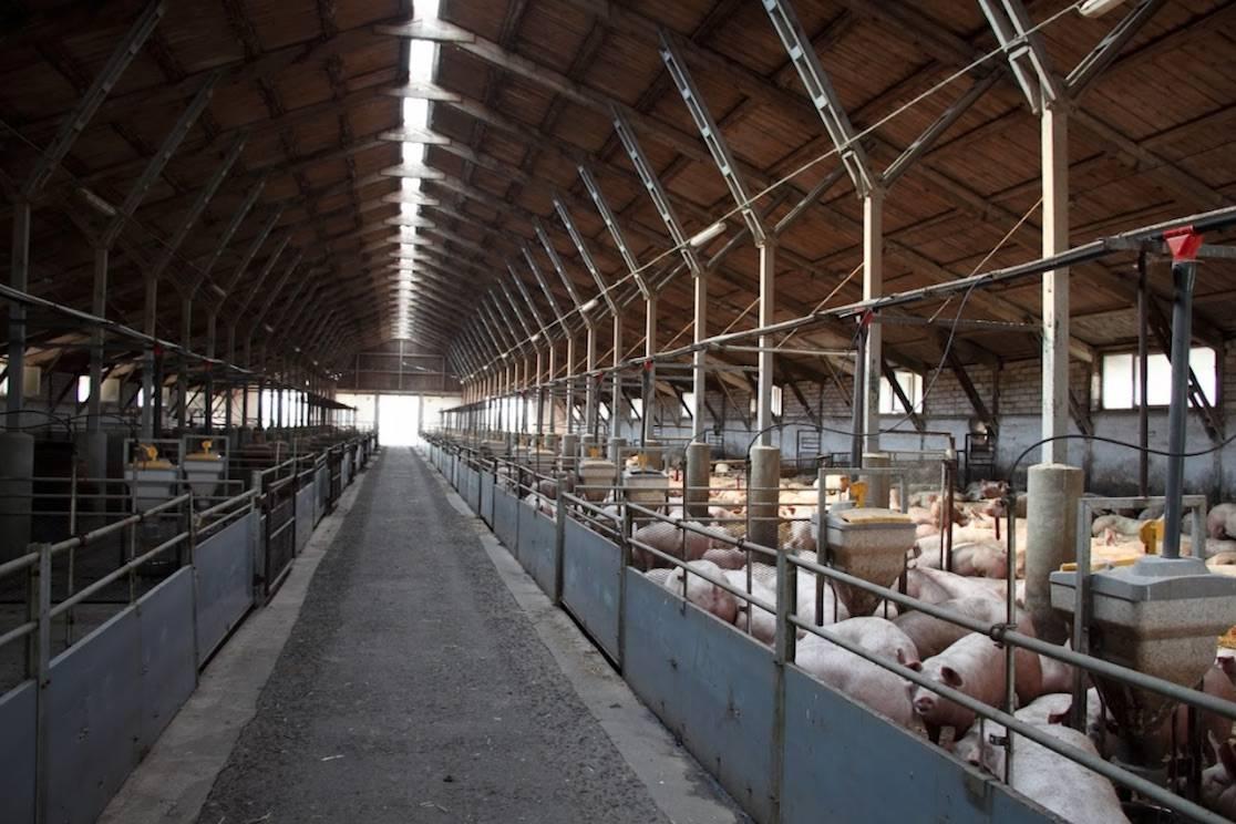 Betty CZ s.r.o - Farma Střemošice